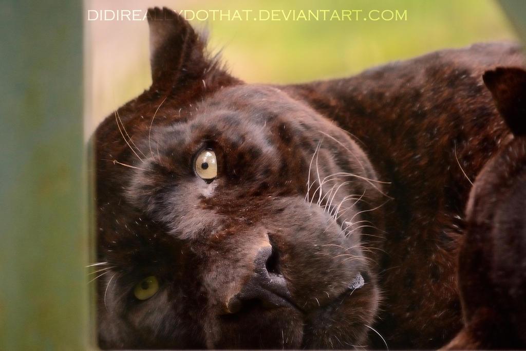Black Panther By Portela On Deviantart: Black Panther By DidIReallyDoThat On DeviantArt