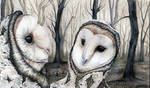 Owls and birches