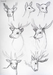 Deers (sketches) by lunejaune145