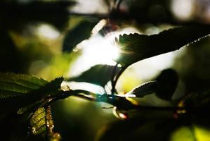 Leaf and lensflare