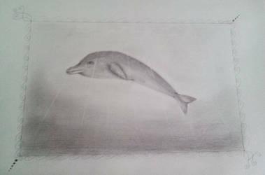 Dalphin