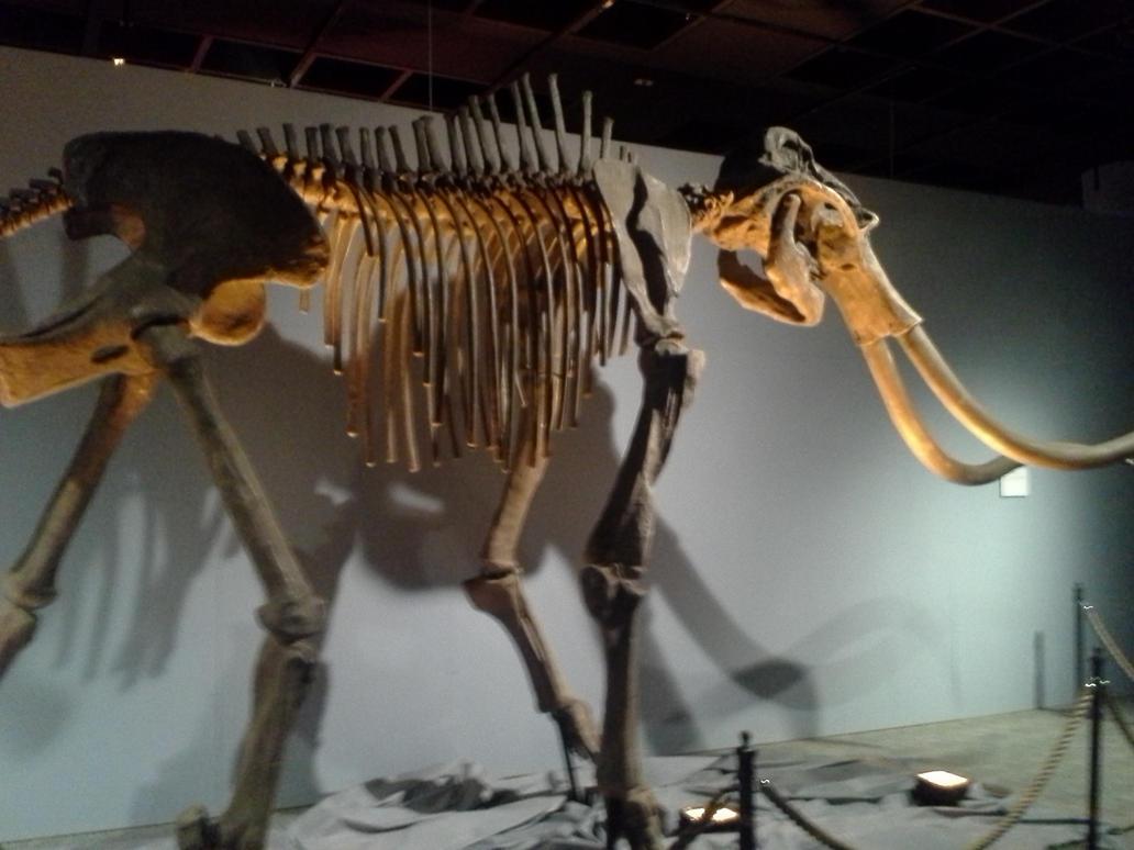 Old Bones by SonofChinglu
