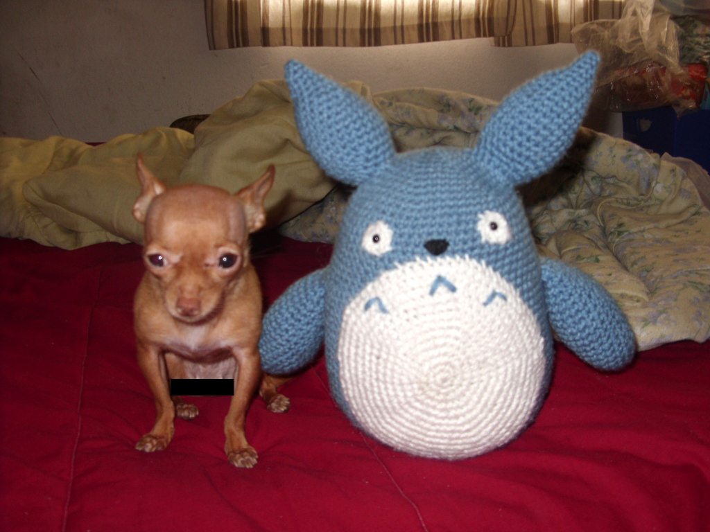 Amigurumi Totoro : Bitsy and amigurumi totoro by sugarcoatidli z on deviantart