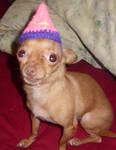Bitsy's birthday hat