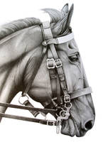 Household Cavalry Horse by AirHorseOne