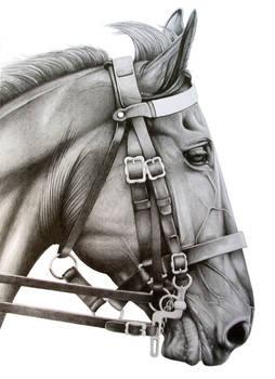 Household Cavalry Horse