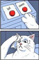 cat meme part 2 by pupett23