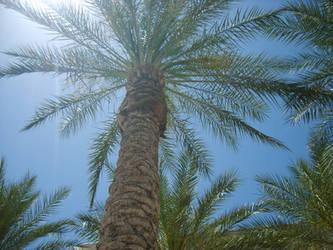 Phoenix palm trees by BadBreathVampire