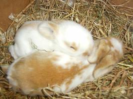 baby rabbits 2 by Rippah2
