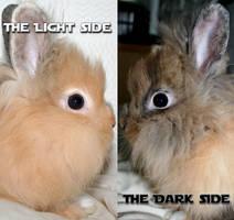 dark and light by Rippah2