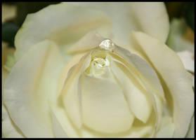 rose drops by Rippah2