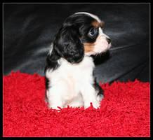 Sad puppy by Rippah2