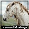 liberated mustangs by Okami-Norino