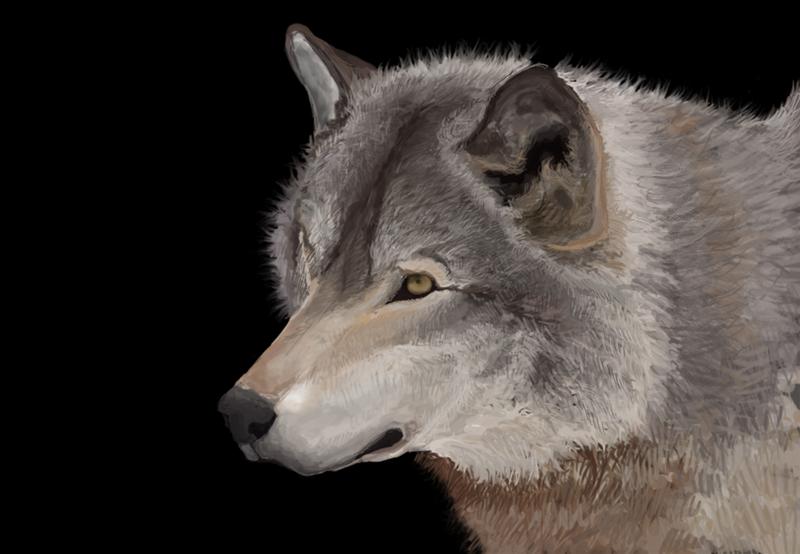 Wolf Portrait by InMyImagination
