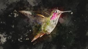 Hummingbird or Colibri bird
