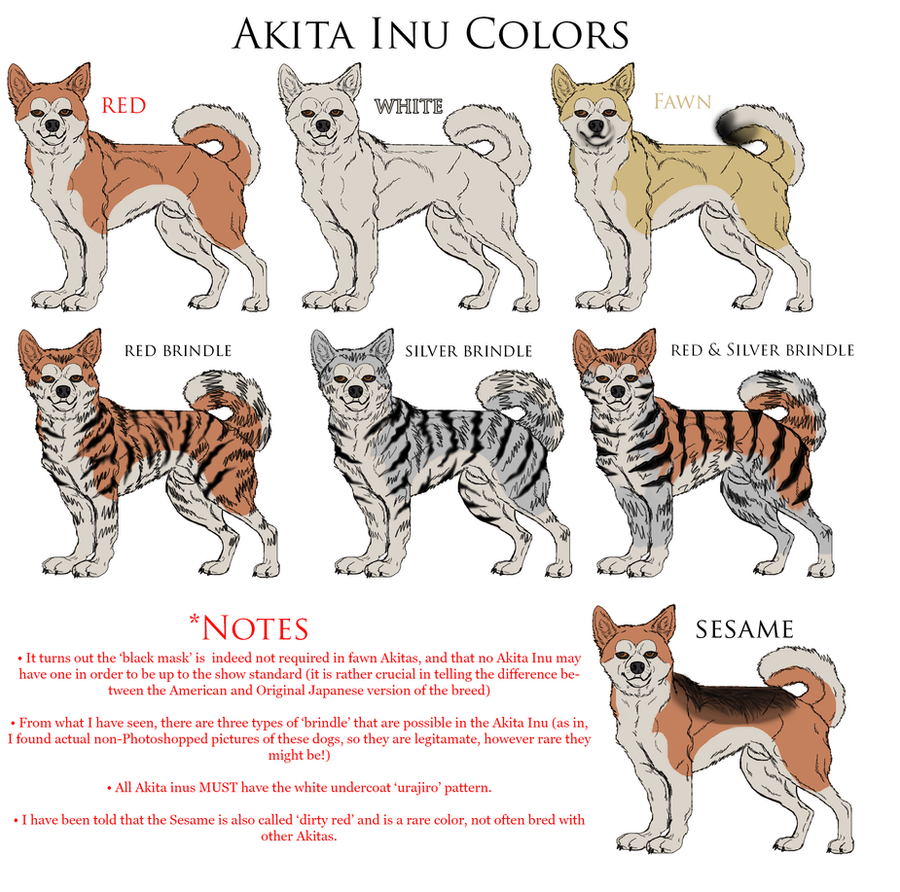 Akita Inu Reference: Colors by Black-Tiger-of-Evil on DeviantArt