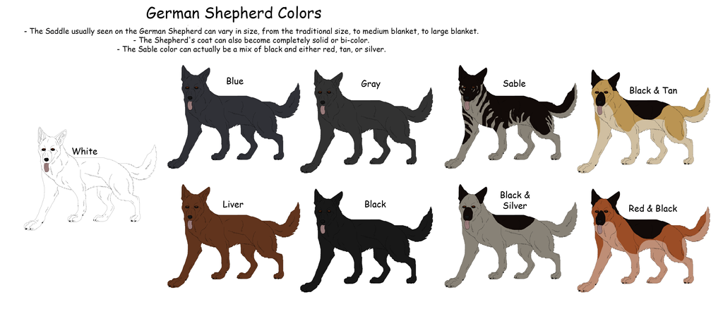 German Shepherd Colors And Markings German shepherd colors by