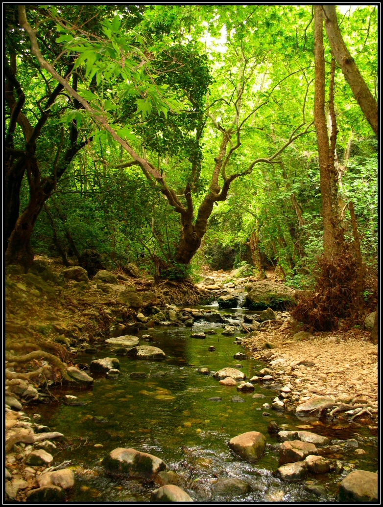 Wandering~ [privado] - Página 2 Forest_by_airdima