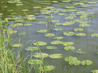 Joyful lake by OrangeAmel
