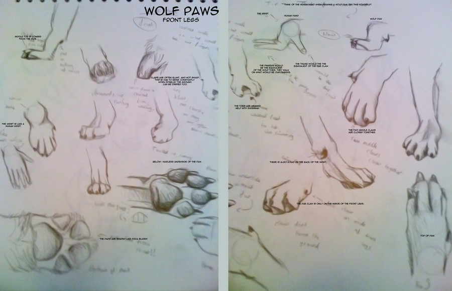 Wolf Front Paws