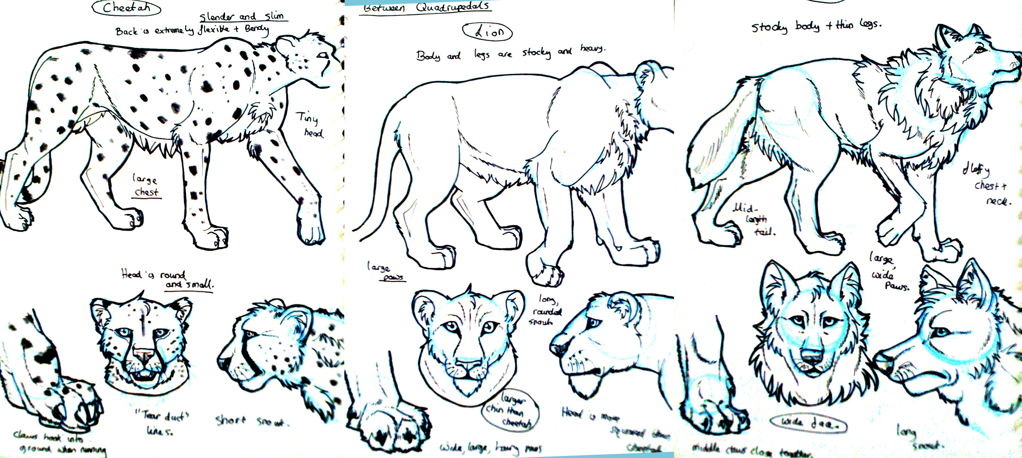 Wolf, cheetah, lion studies by Gashu-Monsata