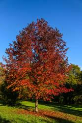 Autumn tree by SP4RTI4TE