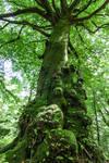 Twisted Mossy Tree IV