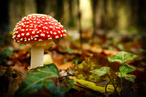 Mushrooms by SP4RTI4TE