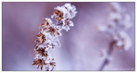Frozen Beauties
