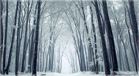 Winterland by kazzdavore