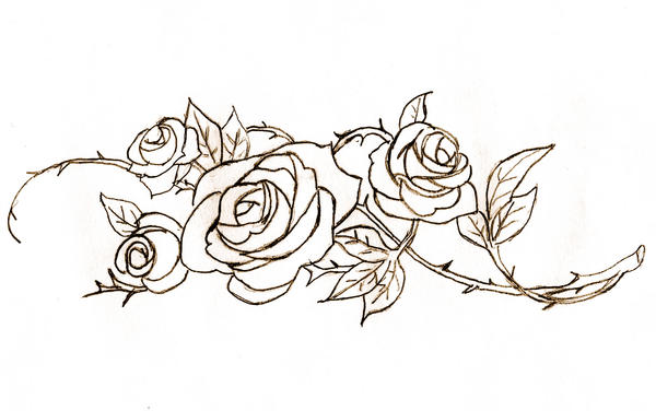 Line Art Of Rose : Roses lineart by rose bullets on deviantart