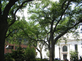 Park in Savannah part 1