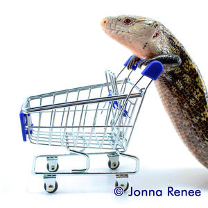 What do lizards shop for?