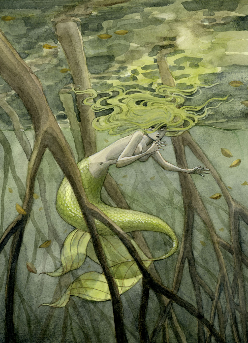 Mangrove Swamp Mermaid by reneenault