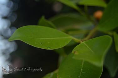 Tears of a Leaf by AmonInShadows