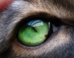Cat's Universe 2