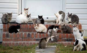 Herd of Cats