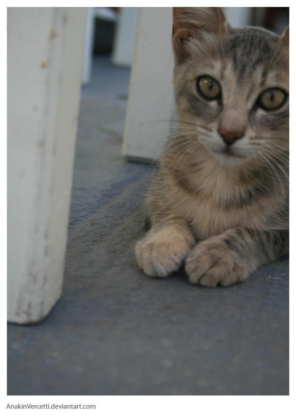 CAT by AnakinVercetti