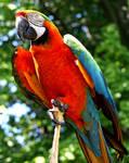 Parrot :Stock: by PixlPhantasy