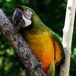 Parrot 2 :Stock: by PixlPhantasy