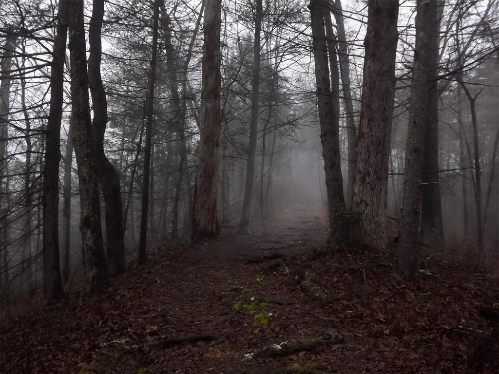 Woods of mystery by Gr... Dark Path In The Woods