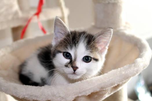 my kitten I