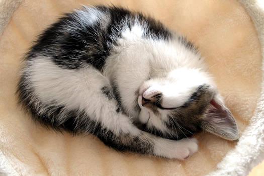 my kitten II