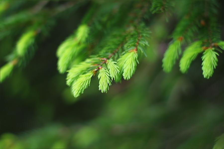 green by hv1234