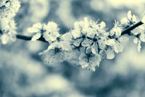 spring by hv1234