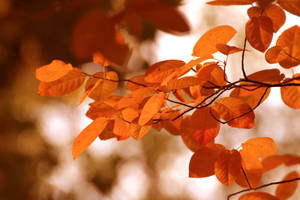 autumn color by hv1234