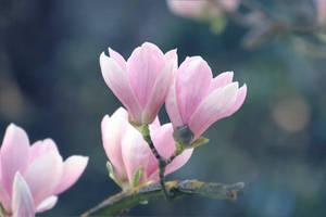 tenderness of spring by hv1234