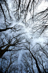 Trees From Below