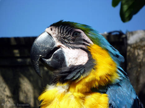 The parrot who doesn't speak !