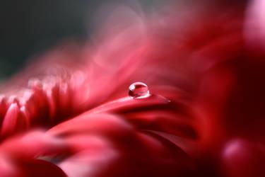 Red by sabinefischer